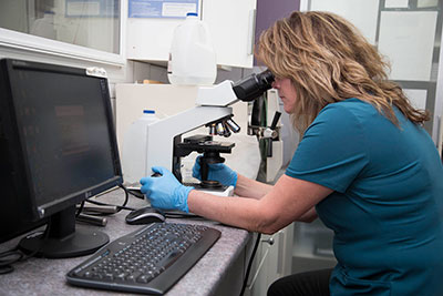 lab technician uses microscope to check small animals blood work