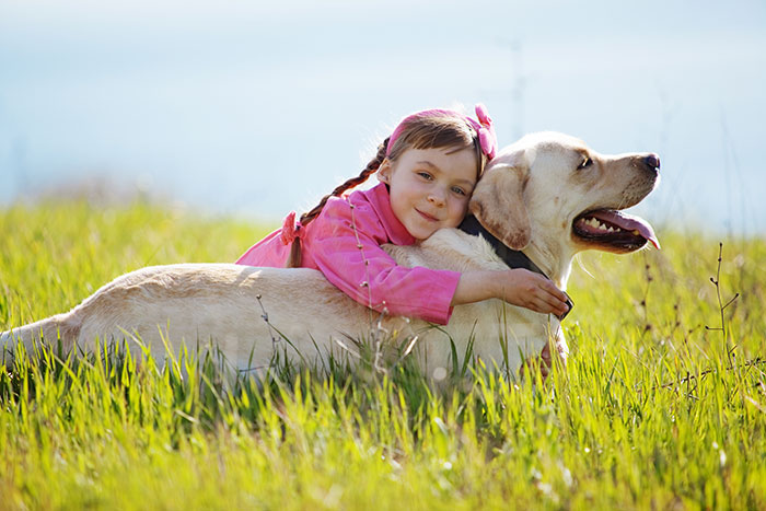 An older dog plays in a field with a young girl