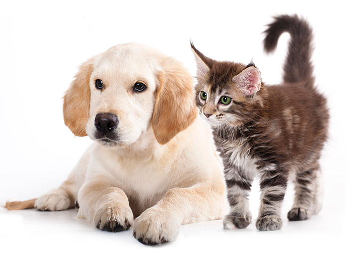 puppies and kittens should be spayed and neutered when young