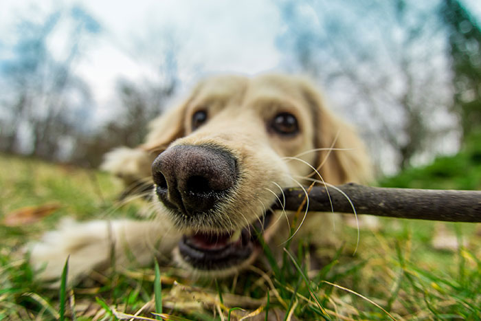 Close up photo of a dog with a stick playing in the park